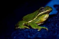 Błękitnej notatki żaba Obraz Royalty Free