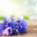 Błękitni cornflowers na bielu Zdjęcie Stock
