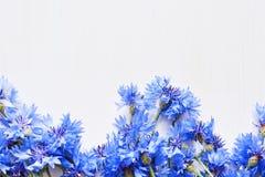 Błękitni cornflowers nad bielem Fotografia Royalty Free
