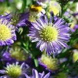 Błękitni jesień kwiaty zdjęcia stock