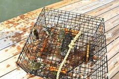 Błękitni kraby łapiący w kraba garnku na Chesapeake zatoce w Virginia obraz stock