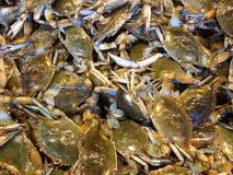 Błękitni kraby przy Rybim rynkiem Obraz Royalty Free