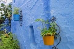Błękitni kwiatów garnki w Chefchaouen i schodki Zdjęcia Royalty Free