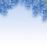 Błękitni kwiaty Zdjęcie Stock