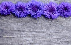 Błękitni kwiaty cornflowers na drewnianym tle obrazy royalty free