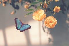 Błękitni motyla i koloru żółtego kwiaty Obraz Stock