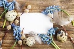 Błękitni muscari kwiaty i przepiórek jajka na drewnie (Gronowy hiacynt) obraz stock