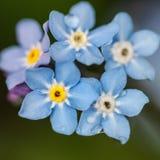 Błękitni piękno obraz stock