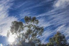 Błękitni whispy nieba z zielonymi drzewami Napier, Zachodni przylądek, Południowa Afryka zdjęcie stock