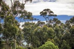 Błękitni whispy nieba z zielonymi drzewami Napier, Zachodni przylądek, Południowa Afryka obraz stock