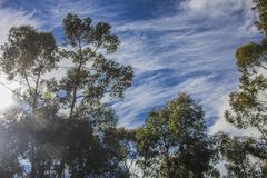 Błękitni whispy nieba z zielonymi drzewami Napier, Zachodni przylądek, Południowa Afryka zdjęcie royalty free