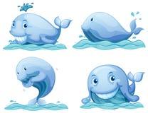 Błękitni wieloryby ilustracja wektor