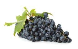 Błękitni winogrona Zdjęcie Stock