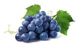 Błękitni winogrona suszą wiązkę na białym tle