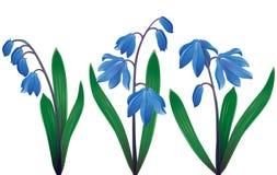błękitny śnieżyczki Obrazy Royalty Free