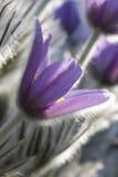 błękitny świetni kwiaty obrazy stock