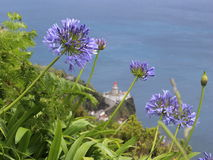 Błękitny agapanthus kwitnie przeciw latarni morskiej i oceanowi Zdjęcie Royalty Free