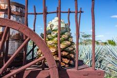 Błękitny agawa furgonu zbliżenie Zdjęcie Royalty Free