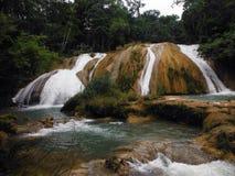 Błękitny Agua Azul Spada kaskadą w Chiapas, Meksyk Zdjęcia Stock