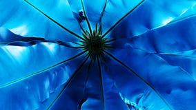 Błękitny Bird& x27; s gniazduje paprociowego tropikalnego zielonego liść, kontrast Obraz Royalty Free