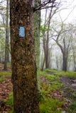 Błękitny blask na Mokrym drzewie Zdjęcia Stock