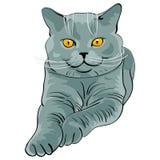 błękitny brytyjski kot kłama spojrzeń shorthair wektor ilustracji