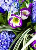 błękitny bukieta zamazani hyacinthus orientalis Obraz Royalty Free