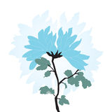błękitny chińska chryzantema Zdjęcia Royalty Free