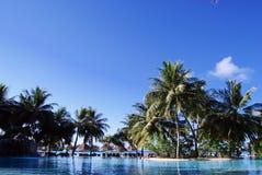 błękitny chmur palmowi nieba drzewa biały Obrazy Stock