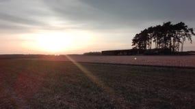błękitny chmurna śródpolna trawy zieleni ranek nieba wiosna zdjęcie royalty free