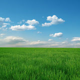 błękitny chmurny śródpolny trawy zieleni niebo zdjęcia royalty free