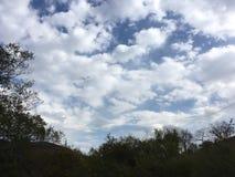 Błękitny chmurny niebo, drzewa Krajobraz, wczesna jesień Zdjęcia Royalty Free