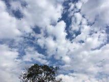 Błękitny chmurny niebo, drzewo Vladivostok natura Zdjęcie Royalty Free