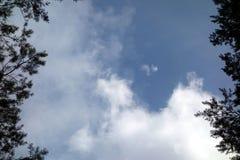 Błękitny chmurny niebo nad drzewa Obrazy Royalty Free