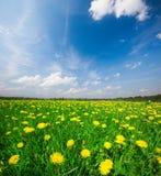 błękitny chmurny pole kwitnie niebo pod kolor żółty Obrazy Stock