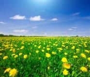błękitny chmurny pole kwitnie niebo pod kolor żółty Zdjęcie Royalty Free