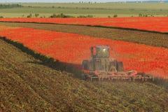 Błękitny ciągnik orze pole z czerwonymi maczkami Zdjęcia Royalty Free