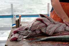 błękitny cleaning ryba rybak fotografia stock