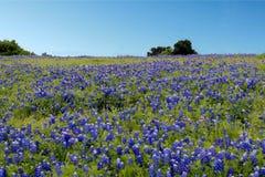 Błękitny czapeczka kwiat zdjęcia royalty free