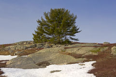 błękitny czarnej jagody pola skał nieba śnieg Fotografia Royalty Free