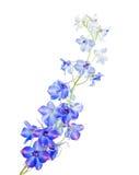błękitny delphinium zdjęcia stock