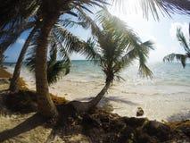 Błękitny denny tło z drzewkami palmowymi Obraz Royalty Free