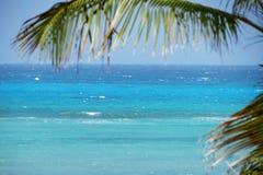 Błękitny denny tło z drzewkami palmowymi Obrazy Royalty Free