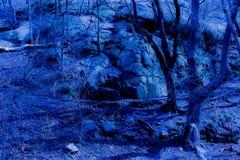 Błękitny fantazja zmierzchu las obrazy royalty free