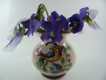 Błękitny fiołek i błękitni biali kwiaty altówki sororia w wazie fotografia royalty free