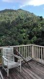 Błękitny góra egzota las Obraz Stock