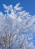 błękitny gałąź zakrywali niebo śnieg Fotografia Royalty Free