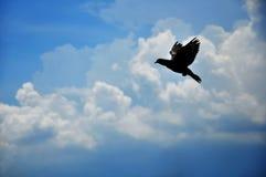 błękitny gołębi niebo Obrazy Royalty Free