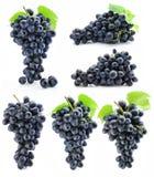 błękitny grona inkasowy winogrono odizolowywający Fotografia Stock