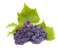 błękitny grona winogrona liść Obrazy Royalty Free